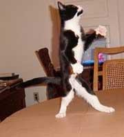 Der findes mange sjove fakta om katte