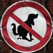 Forstoppelse hos hunde kan have mange årsager