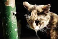 Her ses en gammel kat