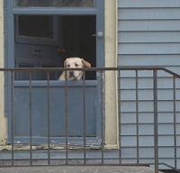 En hund alene hjemme