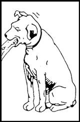 En hund der kaster op