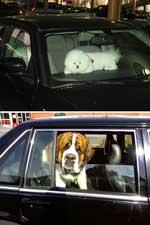Der findes flere forholdsregler, man bør tage, når man har en hund i bilen