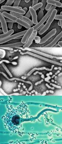 Infektion hos hunde kan skyldes 3 organismer
