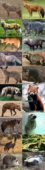 Hvalpesyge er hundesyge hos andre dyr end hunde