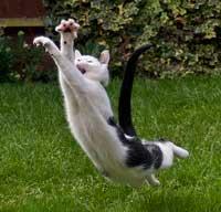 Her ses en kat der springer
