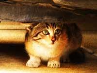 En kat der udviser frygt