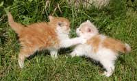 Katteopdragelse kan være sværere end man tror - men det er vigtigt!