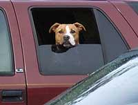 Hunde kan - ligesom mennesker - blive køresyge