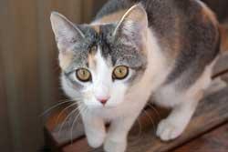 Lungebetændelse hos katte kan have mange årsager