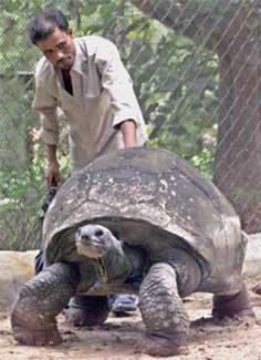 Verdens ældste dyr: Skildpadden Adwaita