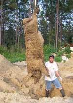Hogzilla skulle være en af de største vildsvin