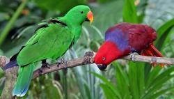 To flotte fugle