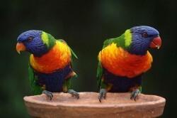 Fugle uden ejer bør indleveres på et fugleinternat