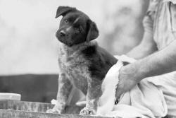 For hyppig badning er en almindelig årsag til tør hud hos hunde