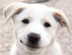 Der er ca. 456.000 hunde i Danmark