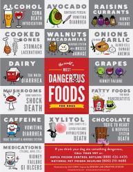 Der er mange ting hunde ikke kan tåle at spise