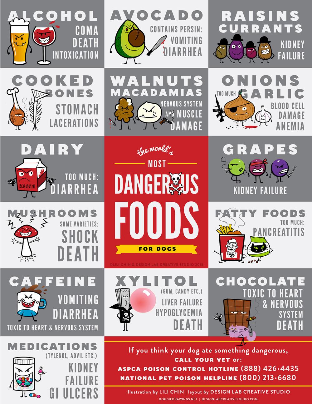 Hvad kan hunde ikke tåle at spise? De 37 værste ting