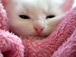Katte kan hoste af mange årsager