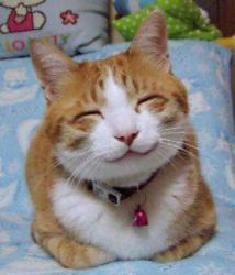 Der er omkring 1,3 mio. katte i Danmark