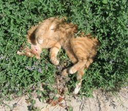 Katteurt har en berusende effekt på katte og er helt ufarligt