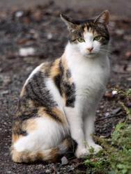 Neutralisering er essentielt for at undgå at populationen af herreløse katte vokser
