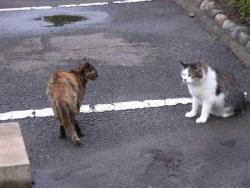 Sterilisation af katte er nødvendigt for at holde bestanden under kontrol